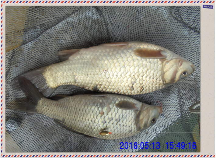 꾸미기_DSC02453.JPG